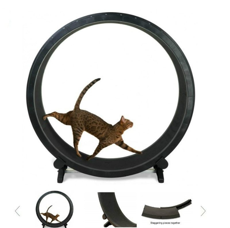 Perfect Cat Treadmill Wheel- Why and How to Buy One